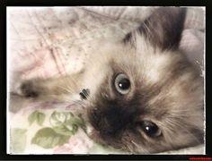 Love Me. - http://cutecatshq.com/cats/love-me/