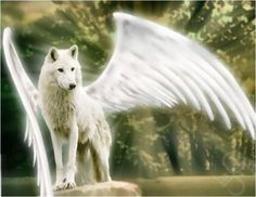 Google Image Result for http://images5.fanpop.com/image/photos/27700000/The-Angel-Wolf-My-Profile-Pic-alpha-and-omega-27755507-600-465.jpg