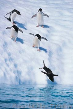 Penguins fun time