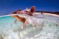 ping in bahamas