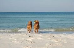 Dog Friendly Florida Panhandle Beach - Quiet and Uncrowded! 2nd HOME