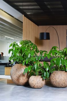 Green Office, House Plants Decor, Office Plants, Interior Design Studio, Container Plants, Beautiful Space, Home Staging, Office Interiors, Landscape Architecture