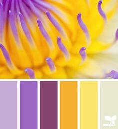 flora brights Color Palette by Design Seeds Color Schemes Colour Palettes, Colour Pallette, Color Combos, Yellow Color Schemes, Lavender Color Scheme, Purple Palette, Color Balance, Color Harmony, Balance Design