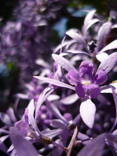 cool purple flower