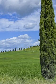 Tuscan landscape with cypress trees by Patricia Hofmeester on Creative Market