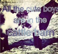 Cute N Country, Country Life, Country Girls, Cattle Barn, Show Cattle, Beef Cattle, Cow Quotes, Animal Quotes, Thats The Way