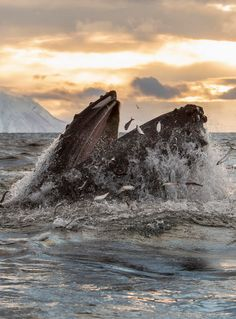 Beautiful sighting of a feeding humpback whale Photo by Kim Abel