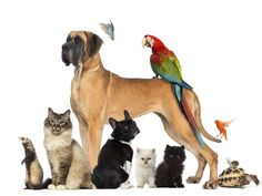In Defense of Non-Pet-Friendly Communities Pet Sitting Services, National Pet Day, My Well Being, Spark People, Weight Loss Blogs, Cat Sitting, House Sitting, Health Insurance Plans, Healthy Pets