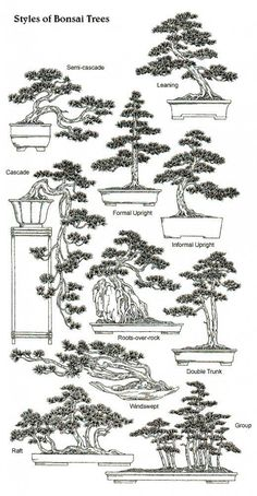 A Beginner's Guide to Bonsai - - A comprehensive guide for creating miniature trees and learning the science behind dwarfing trees. Mini Bonsai, Bonsai Fruit Tree, Bonsai Tree Care, Bonsai Tree Types, Indoor Bonsai Tree, Bonsai Plants, Bonsai Garden, Garden Trees, Fig Tree