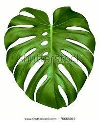 Image result for big green leaves