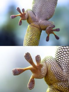 I really like how well the macro lens has captured the texture, shape and pattern of the lizard's scale. The background is simple and not distracting which draws attention to the lizard. The subject is well lit, however it could be improved by lightening the right side of the top picture.