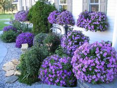 Oh my that is a beautiful display of purple!