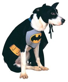 The dog must be BATMAN!!
