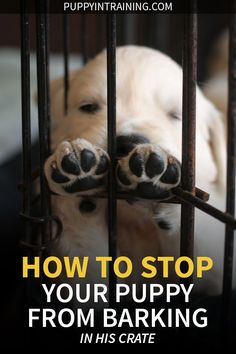 Do you want to know how to stop a puppy from barking in his crate at night. After raising 11 service dog we have a pretty good idea how to crate train puppies. Some are easy, some are difficult, but no two puppies are the same. Training Your Puppy, Dog Training Tips, Potty Training, Kennel Training A Puppy, Training Classes, Best Puppies, Dogs And Puppies, How To Train Puppies, Pet Dogs