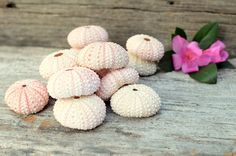 20 Natural Pink Sea Urchins for Wedding and by BeachyChicDecor