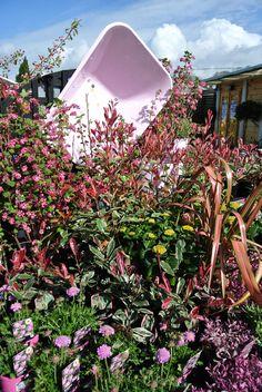 Pretty in Pink - Cowells Garden Centre has strong visual merchandising