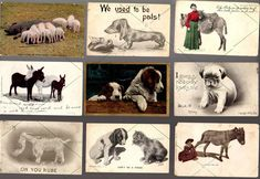11 POSTCARD Antique Vintage = Animals Dogs Cat Donkey Pig w 1c + 2c stamps FUNNY  | eBay #silly #postcards #animals #humor #pictorial #comedy #wit #satire #Sarcasm #real #photography #oldschool #farm #barnyard #cute #cuddly #adorable #pets #horses #toys #postcard