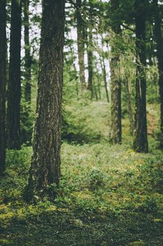 Vintage Forest Photography