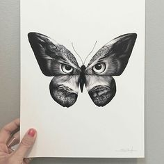 """Great looking #penandink #drawing by @sannawieslander (on IG) called """"Owlifly"""" of what I think is a #butterfly or #moth that has to #evolve another step or two. Now I know that moths and butterflies have #eye spots on their #wings to make predators think they are actually larger predators so I wonder how long it would take an #insect species to proceed through its #evolutionary ladder to have wings that almost perfectly show the face of an #owl? My guess is that there is some #genetic…"""