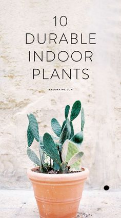 Indoor plants your black thumb won't kill
