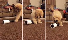 Watch a puppy go crazy over a lint roller #DailyMail | These are some of the stories. See the rest @ http://twodaysnewstand.weebly.com/mail-onlinecom or Video's @ http://www.dailymail.co.uk/video/index.html