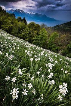Window to spring, Switzerland