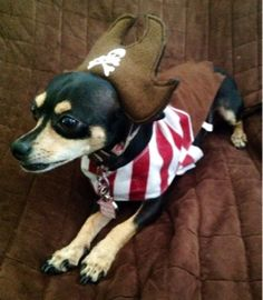 Pirate Dog Costume for #Halloween