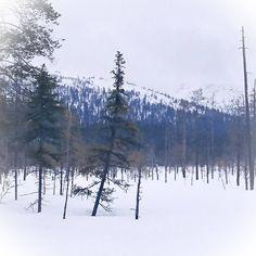 Pyhätunturi, Lapland, Finland.