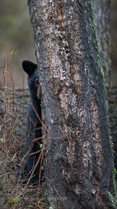 I can bearly see you