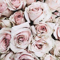 pretty•in•pink #roses #Regram via @theteacherdiva