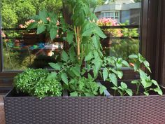 Mesa de Cultivo en la Terraza - Growing Table in my Terrace