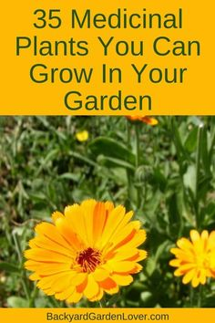 Did you know you can grow medicinal plants in your garden? Here are 35 healing herbs and plants you can easily grow in your garden, in pots and raised beds. Use them to natural remedies to make teas, salves and healing creams. #herbs #medicinalplants #naturalremedies #gardening #organic #health #plants