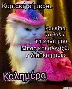 Happy Sunday, Make Me Happy, Good Morning, Thankful, Cats, Winter, Quotes, Beauty, Buen Dia