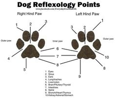 Dog Reflexology Points. Mind blown