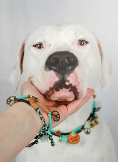 BE WILD AND FREE  www.rudelliebe.de  #hund #frenchbulldog #dog #dogs #halsband #dogsofinstagram #goldenretriever #instadog #dogstagram #dogoftheday #dogs_of_instagram #retriever #labrador #pudel #instagram #instapets #puppy #bestwoof #dalmatiner #hundehalsband #labrador #labradoodle #jackrussel #mops #pets_of_instagram #poodlesofinstagram #australianshepherd #beagle #bully #französischebulldogge #dalmatiner #dackel