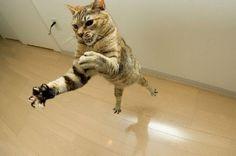 flying_cats_28.jpg (700×463)
