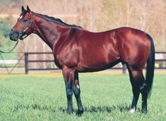 Brief Truce (USA)Top Rated European 3YO Colt (7-9f) Entered Stud in Ireland and Australia 1994, Standing at Independent Stallions