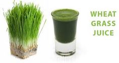 Best Reviews on Wheat Grass Juicer - JuicerReviewsPro