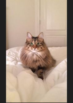 Please share! We are new to the area and need help! MISSING: toots (Maine coon cat) SHE IS: 7lbs, long haired, micro-chipped, very shy. She doesn't have a collar on. HER PARENTS:Mary Erickson (612-987-4101)Randy Erickson (320-583-4620)We live in AMLI Milton park in Alpharetta, Georgia! Any sightings please call!