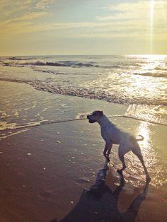 Long walks on the beach