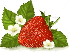 Buy Strawberries with White Flower Vector by Paljas on GraphicRiver. A single image of a strawberry with leaves and blossoms. Strawberry Png, Strawberry Clipart, Strawberry Pictures, Strawberry Kitchen, Body Shop At Home, Fruit Party, Photoshop, Vector Flowers, Pretty Wallpapers