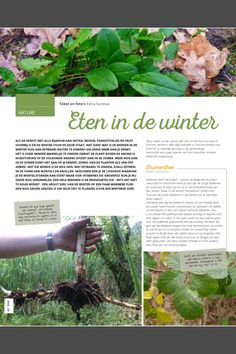 Eten in de winter - Get out magazine. Eetbare wilde planten in de winter
