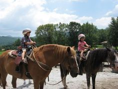 What horse breeds are best for kids.