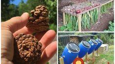 Kto pozná tieto triky, tento poriadne ušetrí na zavlažovaní aj postrekoch: Geniálne vychytávky, ktoré nestoja nič! Compost, Gardening Tips, Remedies, Flowers, Lawn And Garden, Home Remedies, Royal Icing Flowers, Flower, Florals