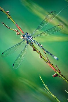 An unusual choice for today! When I see a Dragon Fly, I remember a beautiful soul of a loving, gentle friend, whose life was lost three years ago to colon cancer. Guy Adkins was 41 years old. Hugs and hugs, Guy. 1/31/14                                                                                                                                                                                 More