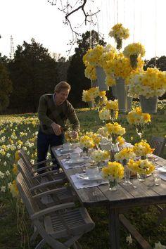 Daffodils. Garden pa