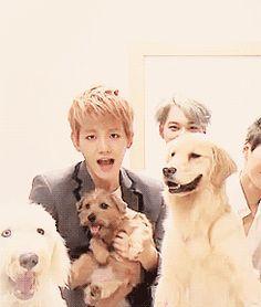 Baekhyun & Kai with the dogs. Kai looks really happy ^^ (gif)
