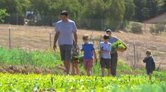 Watch Chef Suzanne Goin Pick Vegetables on a Farm with Her Family - Bon Appétit