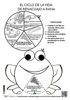 Ciclo de la rana 1st Grade Science, Teaching Science, Science For Kids, Science And Nature, Montessori Activities, Science Activities, Science Projects, Hand Crafts For Kids, Lifecycle Of A Frog