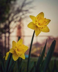 🌱 #flowers #flower  #petal #petals #nature #beautiful #love #pretty #plants #blossom #sopretty #spring #summer #flowerstagram #flowersofinstagram #flowerstyles_gf #flowerslovers #flowerporn #botanical #floral #florals #insta_pick_blossom #flowerm